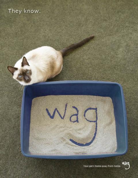 wag_cat_litter